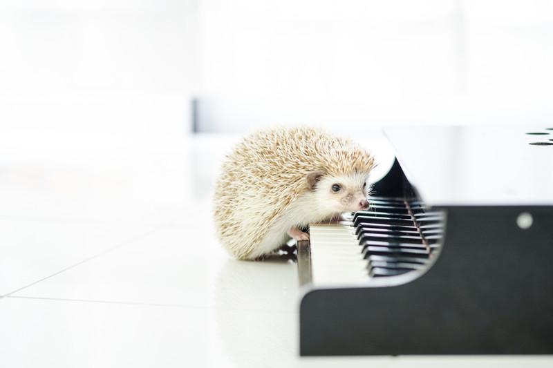 ピアノとハリネズミ