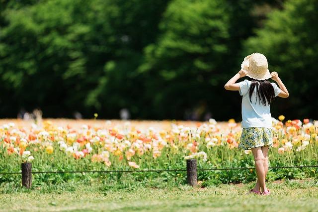 お花畑と子どもの後ろ姿